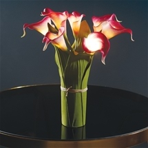 Glowing Calla Lilies