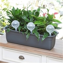Set of 6 Plant Watering Globes